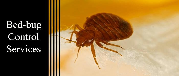 Bed Bug Control Kardinya