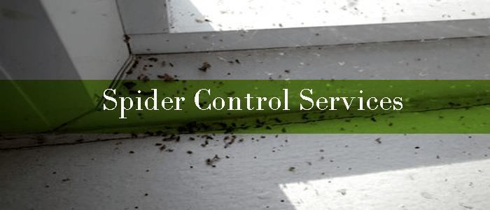 Spider Control Kardinya