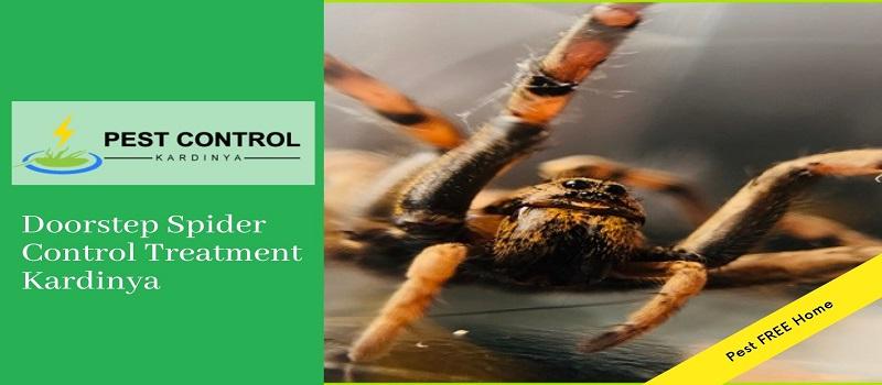 Professional Spider Control Kardinya