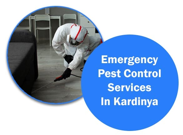Emergency Pest Control Services in Kardinya